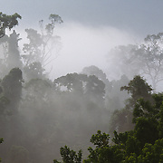 Tropical rainforest in Danum Valley during a morning fog. Sabah, Malaysia