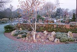 Betula utilis on a frosty morning in John Massey's garden. Silver birch tree