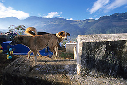 Dogs On Grave