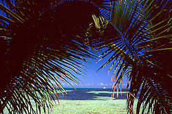 Caribbean sea and blue sky viewed through palm fronds.