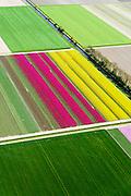 Nederland, Flevoland, Gemeente Noordoostpolder, 07-05-2015; bollenvelden met tulpen en narcissen in de nieuwe bollenstreek. Noordoostpolder ten noordwesten van Creil.. <br /> Bulb fields with tulips and daffodils. Northeast Polder, the new flower bulb region.<br /> luchtfoto (toeslag op standard tarieven);<br /> aerial photo (additional fee required);<br /> copyright foto/photo Siebe Swart