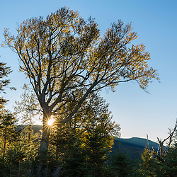Early morning on the lower slopes of Mount Abraham in Mount Abram Township, Maine.