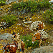 Horse and mule pack trains, like something straight out of the Old West, still ply the steep trails of the High Sierra in King's Canyon National Park.