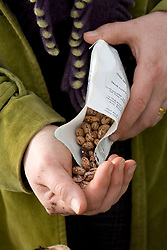 Sowing borlotti beans<br /> Taking seeds out of packet