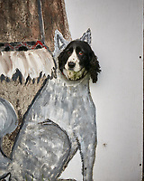 Dog in Wrangell. Image taken with a Nikon D300 camera and 70-300 mm VR lens.