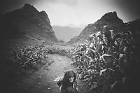 A woman walks through corn fields on a mountainside in Ha Giang province in northern Vietnam.