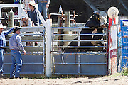 Rodeo, Southland, New Zealand