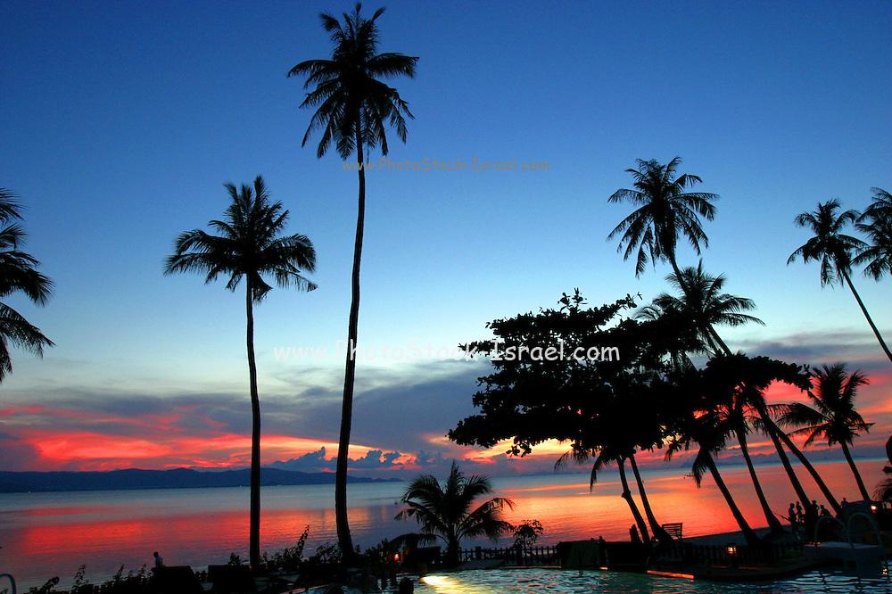 palm trees at sun set Koh Phangan Thailand
