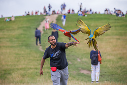 © Licensed to London News Pictures.  20/08/2021. London, UK. Chukey plays with his pet parrots Sonic and Phoenix on a warm but cloudy afternoon at Primrose Hill, north London. The weather forecast predicts rain in southeast England over the weekend. Photo credit: Marcin Nowak/LNP