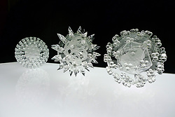 "IN PHOTO: A collection of viruses<br /> <br /> Internationally-renowned British artist Luke Jerram has created a coronavirus glass sculpture in tribute to the huge global scientific and medical effort to combat the pandemic.<br /> <br /> Made in glass, at 23cm in diameter, it is 1 million times larger than the actual virus. <br /> <br /> It was commissioned 5 weeks ago by a university in America to reflect its current and future research and learning in health, the environment and intelligent systems, and its focus on solving global challenges.  <br /> <br /> Luke says: ""Helping to communicate the form of the virus to the public, the artwork has been created as an alternative representation to the artificially coloured imagery received through the media. In fact, viruses have no colour as they are smaller than the wavelength of light."" <br /> <br /> ""This artwork is a tribute to the scientists and medical teams who are working collaboratively across the world to try to slow the spread of the virus. It is vital we attempt to slow the spread of coronavirus by working together globally, so our health services can manage this pandemic."" <br /> <br /> Made through a process of scientific glassblowing, the coronavirus model is based on the latest scientific understanding and diagrams of the virus.  <br /> <br /> Profits from this glass model are going to Médecins Sans Frontières (MSF) who will be assisting developing countries deal with the fallout of the coronavirus epidemic. <br /> <br /> This new model is just the latest in Luke's Glass Microbiology series of virus sculptures. Luke and his glassblowing team have, in the past, made other sculptures of viruses from swine flu and Ebola to smallpox and HIV.<br /> <br /> Respected in the scientific community, the glass sculptures have featured in The Lancet, Scientific American, British Medical Journal (BMJ) and on the front cover of Nature Magazine.  <br /> <br /> The Glass Microbiology sculptures are in museum collections around the world, including the Metropolitan Museum, NYC; Wellcome Collection, London and the"