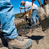 042013       Cable Hoover<br /> <br /> Phil Carter, center, and other volunteers from Albuquerque and Santa Fe use shovels to brake up clumps of bullrushes so they can transplant the vegetation at Cebolla Canyon in El Malpais National Monument Saturday.