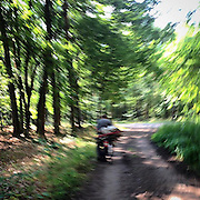 Lysa nad labem. #forest #nature #running #man #bike #czechrepublic #wood #lysa #trees #forest #peace #mind #green #track
