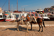Pack Ponies waiting to be loaded with goods on Hydra, Greek Saronic Islands .<br /> <br /> Visit our GREEK HISTORIC PLACES PHOTO COLLECTIONS for more photos to download or buy as wall art prints https://funkystock.photoshelter.com/gallery-collection/Pictures-Images-of-Greece-Photos-of-Greek-Historic-Landmark-Sites/C0000w6e8OkknEb8