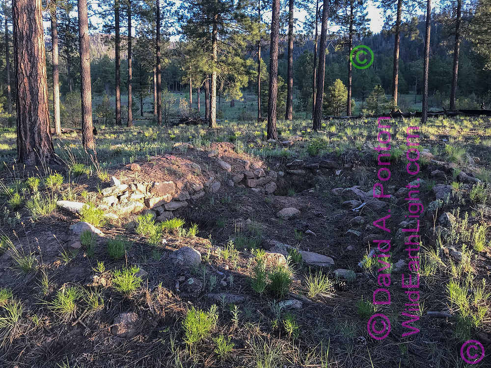 Ruins of stone walled field house of Ancestral Pueblo people, partially excavated most likely by pot hunters, Vallecitos de los Indios, Jemez Mountains, New Mexico, © David A. Ponton