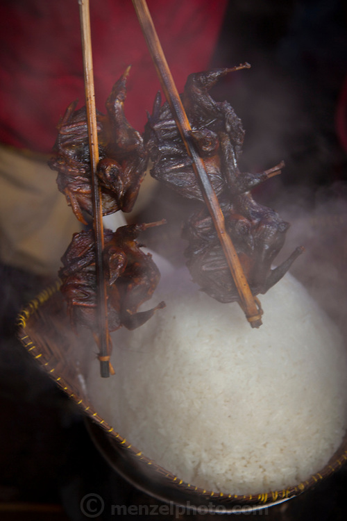 Roasted bats on a stick and sticky rice in Phou Khoun, Laos.