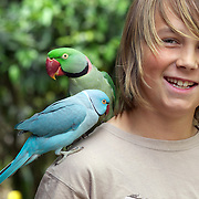 Kids with coloured parrots at Parrot Place 1 Mission Rd. kerikeri. New Zealand, November 2010. Photo Tim Clayton.