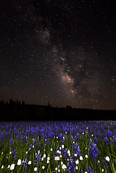 """""""Milky Way Above Sagehen Meadows 2"""" - Photograph of the Milky Way and other stars above a field of Camas wildflowers at Sagehen Meadows, near Truckee, California."""