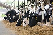 Inhauma_MG, Brasil.<br /> <br /> Fazenda Leiteira  True Type em Inhauma, Minas Gerais.<br /> <br /> Farm True Type  in Inhauma, Minas Gerais.<br /> <br /> Foto: HUGO CORDEIRO / NITRO