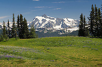 Mount Shuksan seen from wildflower meadows of Skyline Divide, Mount Baker Wilderness Washington