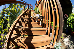 Zelda the cat runs down the stairs to the back yard of her home in Oakland, Calif., Wednesday, June 10, 2020. (Photo by D. Ross Cameron)