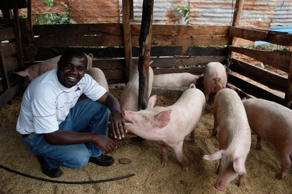 Michael Chega at his farm near Thika, Nairobi, Kenya. His successful farming has been boosted with loans from the microfinance organisation ECLOF that do not require collateral. Michael produces 800 broilers a month and 30 pigs in 6 months. His loan at the time of the photograph was for 95,000 Kenyan Shilligs (around USD1300).