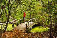 NC01290-00...NORTH CAROLINA - Hiker on an arched bridge over a marsh on the Center Traill through a  maritime forest at Nags Head Woods Preserve on the Outer Banks at Nags Head.