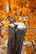 Snow On top Of An Old Tree Stump