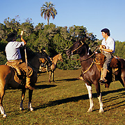 South America, Uruguay, Florida, Gauchos on a working ranch.