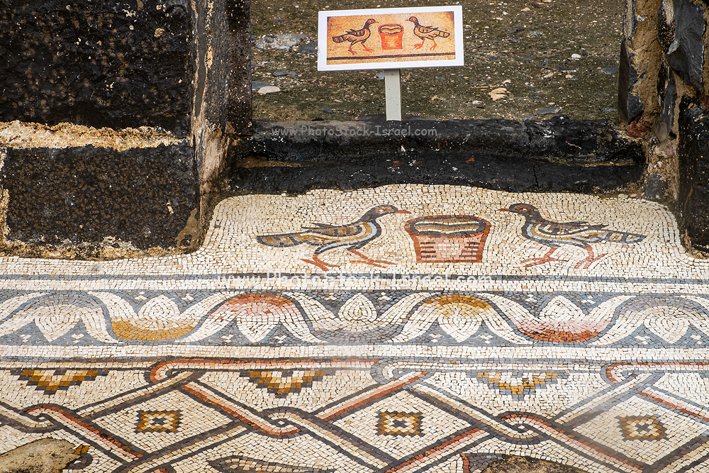 Israel, Sea of Galilee, Kursi, Gergesa, Byzantine monastery and church with a mosaic floor the traditional site of Jesus' miracle of casting out the legion of demons into a herd of swine
