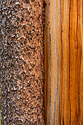 Lodgepole Pine trunk, with and without Bark,Yosemite National Park, California