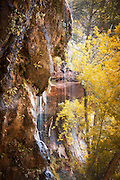 The Weeping Rock, Inside the Temple of Sinawava, Zion National Park, on the Pa'rus Trail, Utah, United States of America