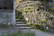 fresh green weeds growing by concrete urban stairs