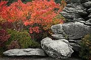 Ancient rock and autumn color, Blue Ridge Parkway, North Carolina