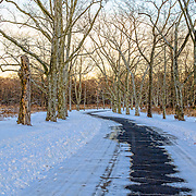 One of the paved ways at Duke Farms, Hillsborough, NJ.  The sun is setting behind the trees and the golden light is casting its glow across the scene.  There are wonderful details in the snow and trees as the roadway meanders through them.