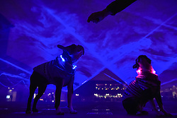 """© Licensed to London News Pictures. 17/01/2018. LONDON, UK. Owner Leon Harwood feeds (L to R) Henry and Bess, a pair of Boston terriers amidst """"Waterlicht"""" by Daan Roosegaarde in Granary Square, Kings Cross.  Preview of Lumiere London, the capital's largest arts festival commissioned by The Mayor of London and produced by Artichoke.  Light installations by leading artists have been set up, both north and south of the river for the public to view 18-21 January.   Photo credit: Stephen Chung/LNP"""