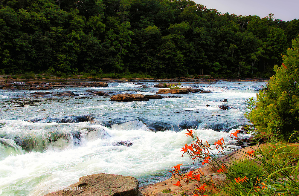 """""""White Water and Lilies""""<br /> <br /> Sit upon the rocks by the Youghiogheny River in Ohiopyle. Strong waters rush over the rocks, beautiful forests line the river, and lovely Day lilies bend towards the water!!<br /> <br /> Laurel Highlands Area of Pennsylvania by Rachel Cohen"""