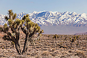 Monte Cristo mountains near Goldfield, Nevada, USA