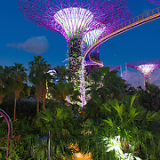 Supertrees grove illumination show and Skyway bridge in the Gardens by the Bay, Singapore
