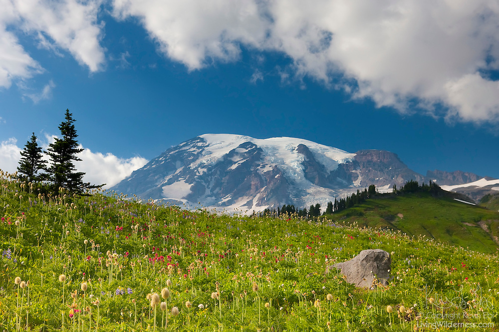 Summer wildflowers blanket the alpine meadows of Paradise in Mount Rainier National Park, Washington. The meadow includes beargrass, Indian paintbrush, and lupine.