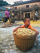 """I was surprised to find that the villages seemed mostly occupied by the elderly and the very young. With the rapid industrialization of the coast, many teenage and younger folks have left the villages to find work in the factories of Guangdong, where the salaries they receive are often sent home for upkeep.  <br /> I struggled to pick up two huge baskets of peanuts on a stick when an elderly auntie smiled, quickly hoisted the peanuts as if they were as light as bedding.  With peanuts slung over her shoulder, she told me, """"I'm 90 years old!"""" just to rub it in.<br /> One of my friend's uncles, a civil engineer in Guangzhou, had recently retired, using his lifetime of earnings to refurnish the home he grew up in Toisan.  He remarked that nearly half of the families he had known in his childhood had now moved to cities, but the dream was always to return to a quieter, more wholesome village life in their later years."""