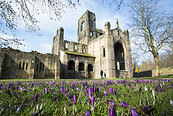 © Licensed to London News Pictures. 16/02/2016. Leeds, UK. People enjoy the sunny weather and the colourful crocuses on a bright and sunny day at Kirkstall Abbey in Leeds, West Yorkshire. Forecasters are predicting cold weather and snow this week but there was no sign of that in Leeds today. Photo credit : Ian Hinchliffe/LNP