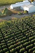 Hops in the Willamette Valley, Oregon