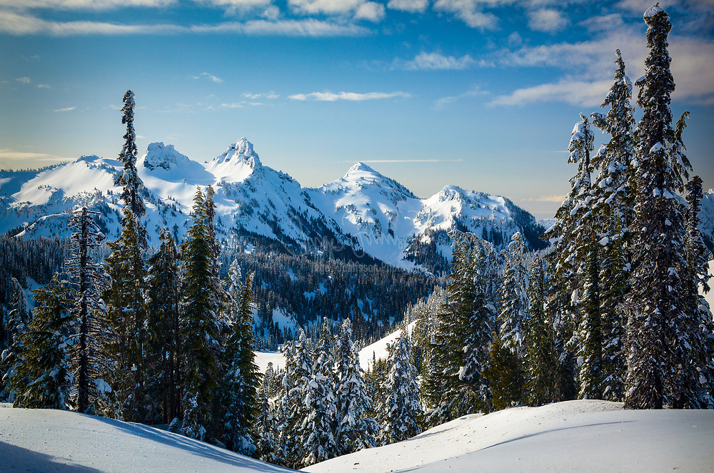 Snow and trees at the Tatoosh Range in Mount Rainier National Park in the winter.