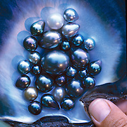 A rare collection of perhaps some of the bestTahitian black pearls in the world, hi-graded from a 25-year harvest of 80% of the pearls that come out of Tahiti.