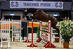 KopfNr. 64 BERGALINA von Donauabend<br /> 5. Trakehner Freispring-Cup<br /> Neumünster - 58. Int. Trakehner Hengstmarkt 2020<br /> 15. Oktober 2020<br /> © www.sportfotos-lafrentz.de/Stefan Lafrentz