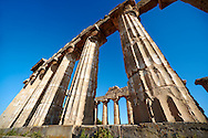 Greek Dorik columns at the  ruins of Temple F at Selinunte, Sicily Greek Dorik Temple columns of the ruins of the Temple of Hera, Temple E, Selinunte, Sicily .<br /> <br /> If you prefer to buy from our ALAMY PHOTO LIBRARY  Collection visit : https://www.alamy.com/portfolio/paul-williams-funkystock/selinuntetemple.html<br /> Visit our CLASSICAL WORLD HISTORIC SITES PHOTO COLLECTIONS for more photos to buy as buy as wall art prints https://funkystock.photoshelter.com/gallery-collection/Classical-Era-Historic-Sites-Archaeological-Sites-Pictures-Images/C0000g4bSGiDL9rw