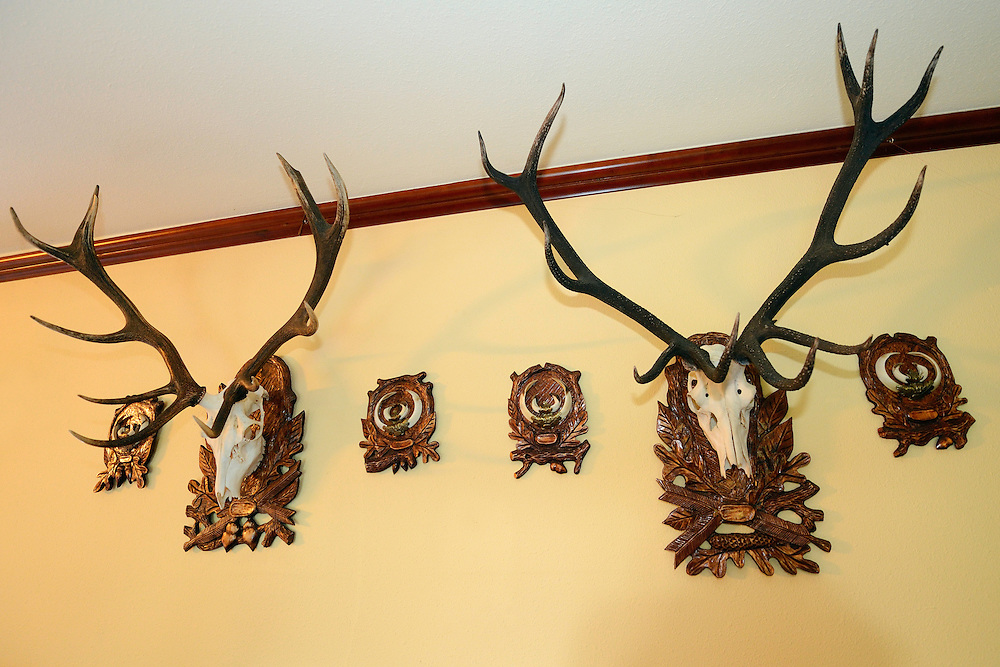 """Red deer stag antler trophies,  at the Hunting club """"Wild Boar"""" in Kopice, near Goleniow, Poland, Oder river delta/Odra river rewilding area, Stettiner Haff, on the border between Germany and Poland"""