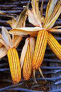 Corn cobs drying - Hungary