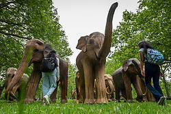 © Licensed to London News Pictures. 17/06/2021. LONDON, UK.  Women view some of the 100 wooden elephants on display in Green Park, part of the CoExistence herd.  Handcrafted from a natural plant material called Lantana camara, the wooden elephants are currently on an installation tour of the UK to highlight a crowded planet and human encroachment on wild places.   Photo credit: Stephen Chung/LNP