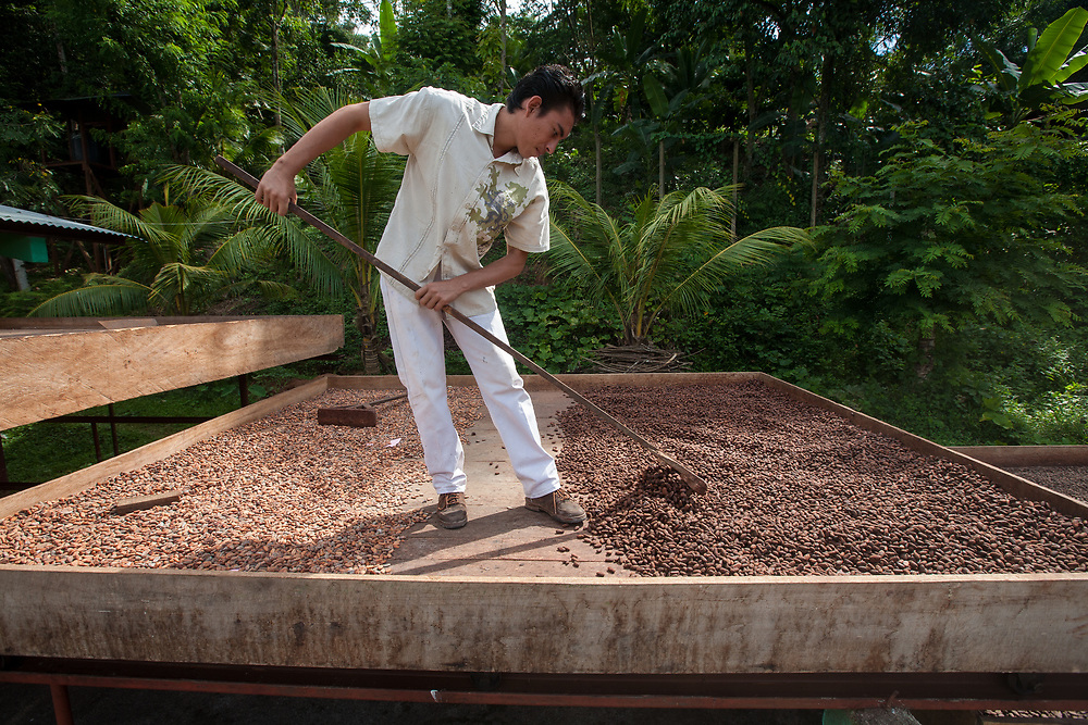 A worker rakes over cocoa beans during the drying process. Cooperativa de Servicios Agroforestal y Comercialización de Cacao, CACAONICA, is located in Waslala, Nicaragua and is Fairtrade-certified.